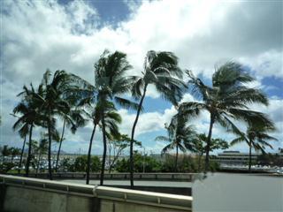 ハワイのやしの木