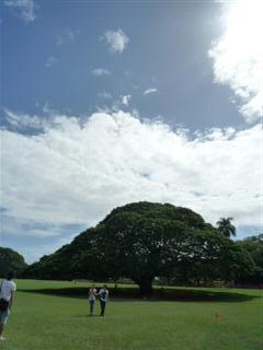 この木なんの木の木ですよ